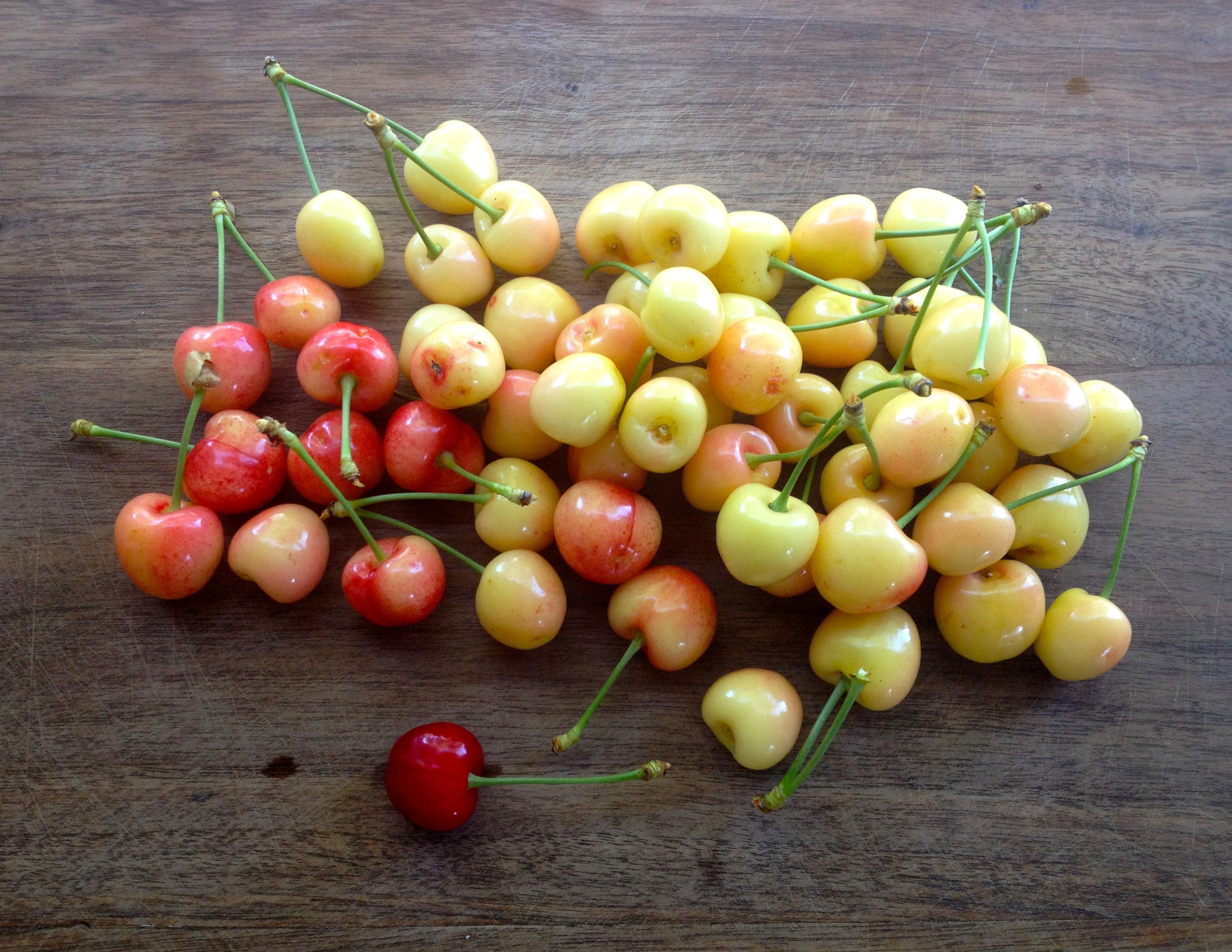 Three Types Sweet Cherries Micro Showcase
